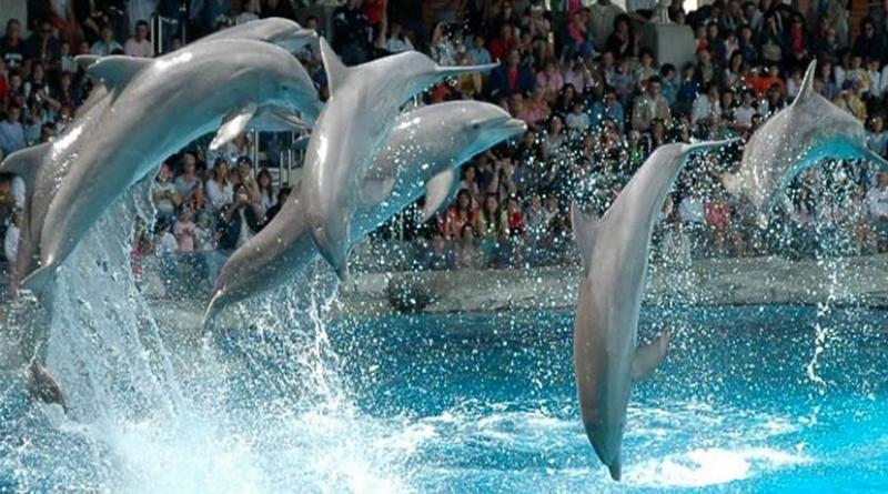 дельфинарум Варна