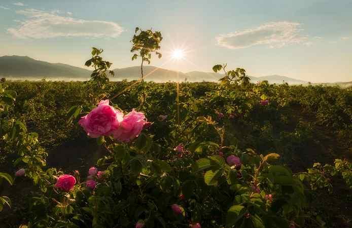 Город Казанлык - Долина роз