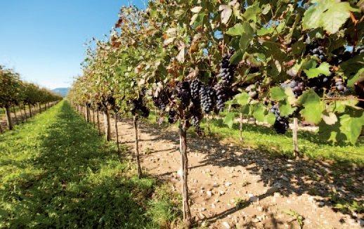 Основные виноделческие регионы в Болгарии