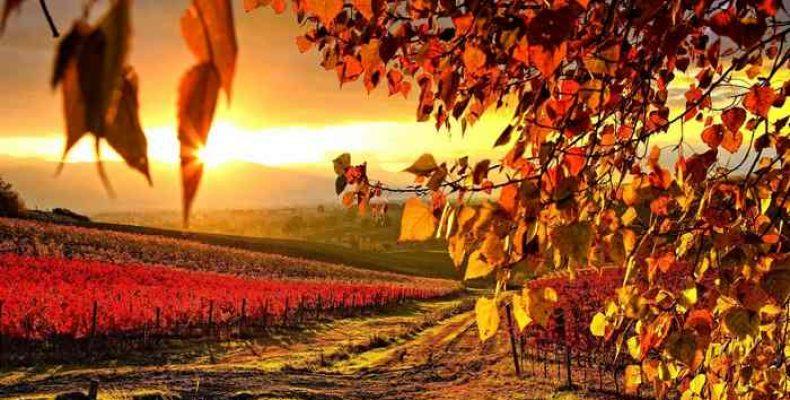 10 болгарских винных сортов винограда